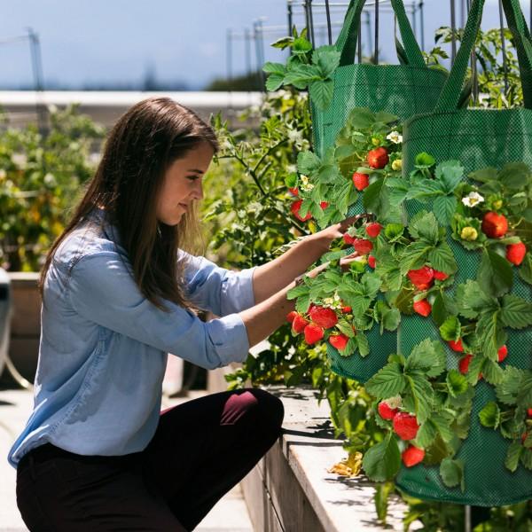 Grafner® Pflanztasche hängend Hängebeet 45cm Pflanzbeutel zum aufhängen für Blumen Kräuter Pflanzen